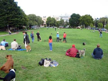 Duboce Park is a dog-lovers heaven!